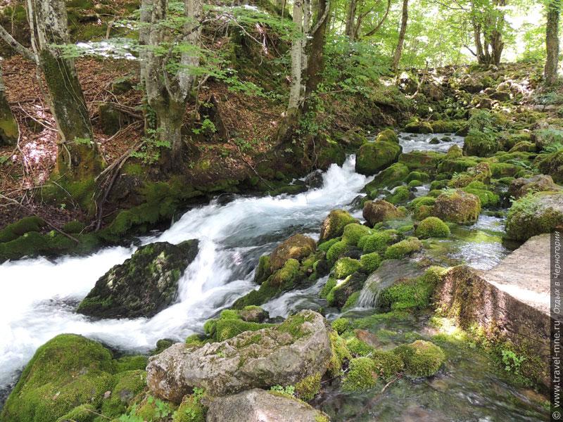 Природа Черногории славится своей красотой и чистотой экологии