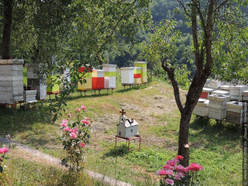 Монашеское подсобное хозяйство включает в себя пасеку с пчелами