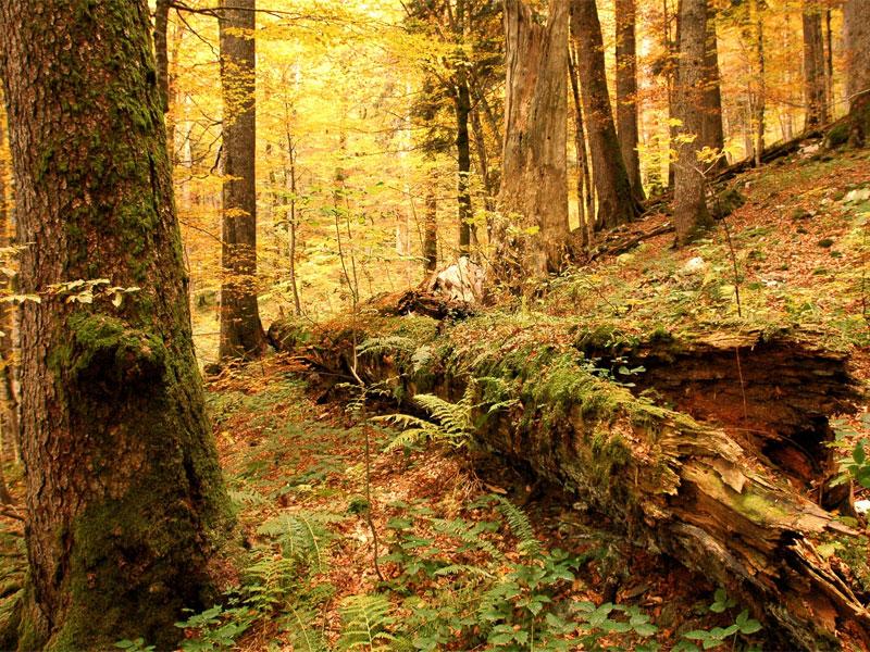 Древнейший лесной массив национального парка Биоградская гора - это настоящее сокровище всей Европы