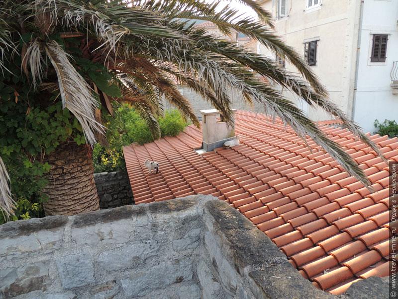 По старинным крышам бегают вполне современные кошки