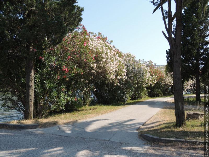 Островом Цветов эту местность когда-то назвали за обилие цветущих растений
