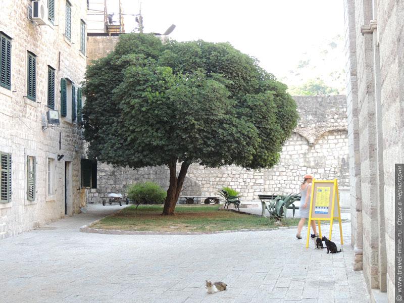 Знаменитые которские кошки и дерево в одном из двориков