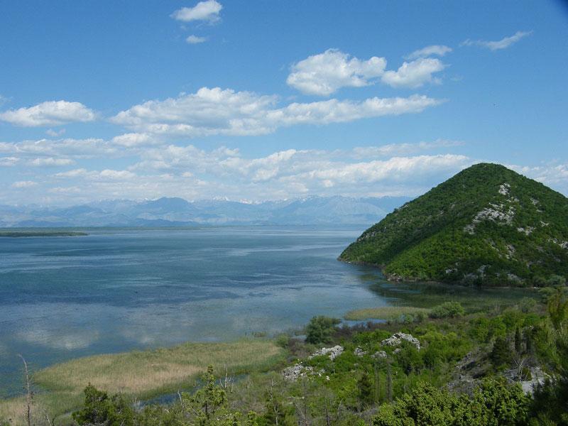 Главное богатство Скадарского озера - его уникальные флора и фауна