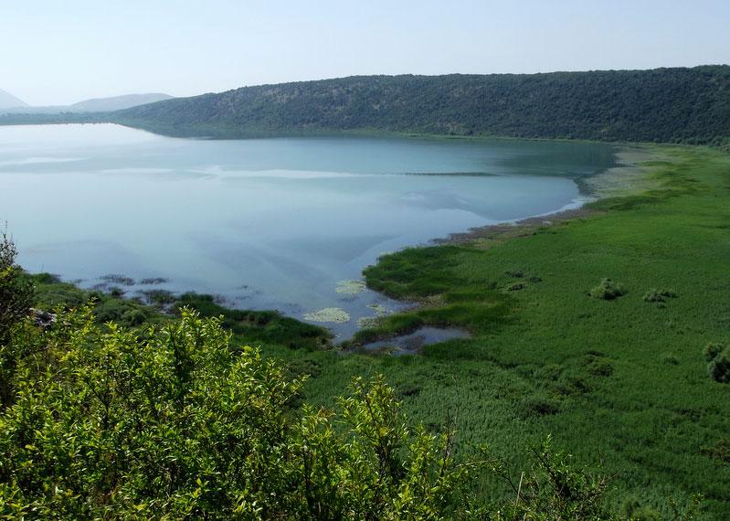 Шасское озеро почти со всех сторон окружено камышовыми зарослями