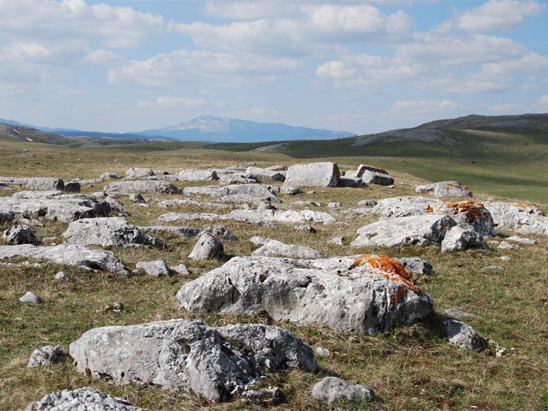 Стечки - это места компактного размещения большого числа средневековых надгробий