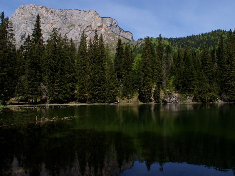 Змеиное озеро со всех сторон окружено густым еловником