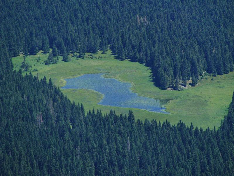 Озеро Барно со всех сторон окружено густым хвойным лесом
